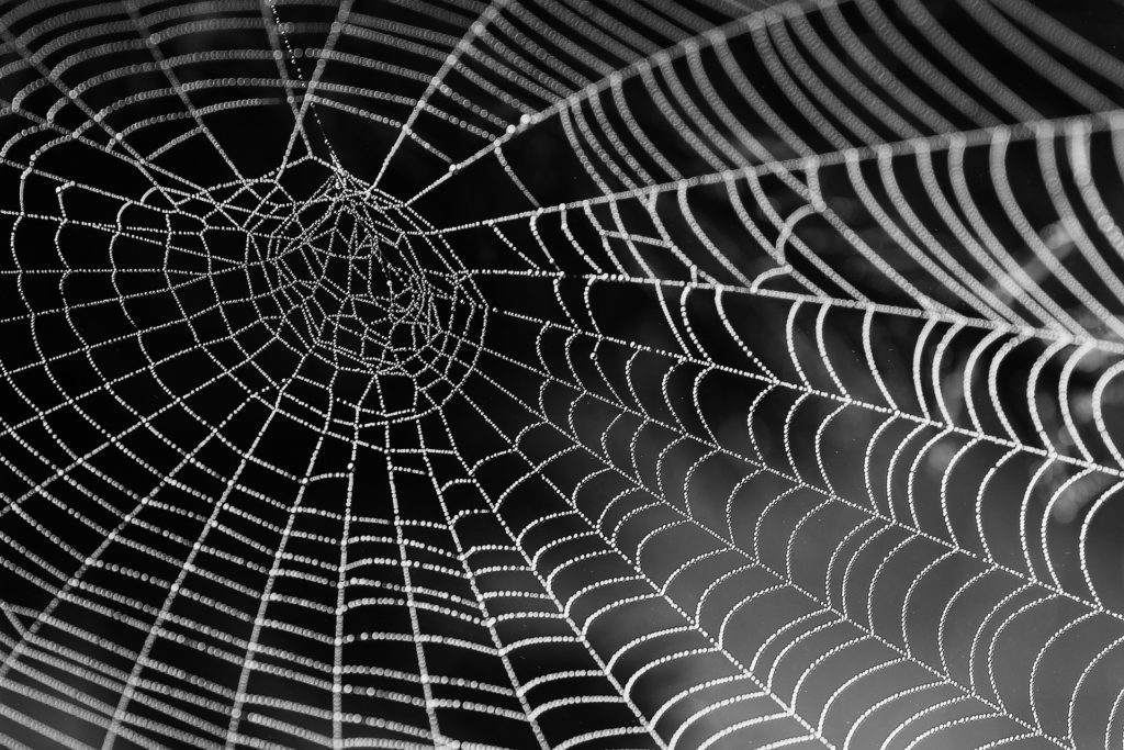 Arachnophobia and How to Rid Yourself of Anxiety